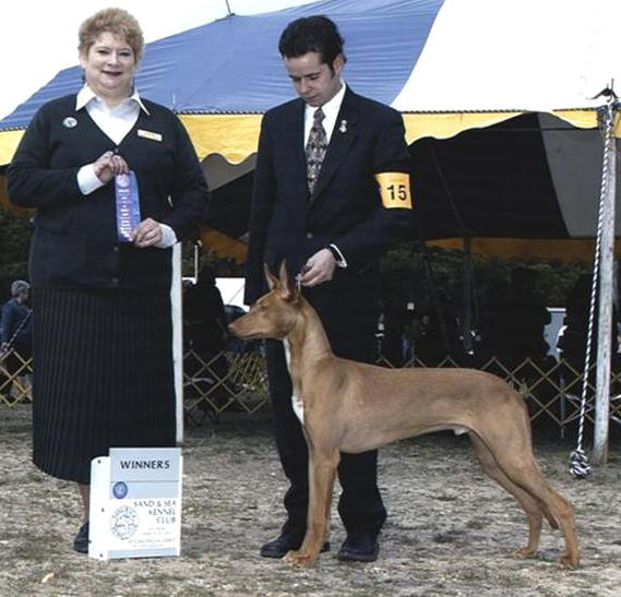 Neo at 8 months old going Winners Dog