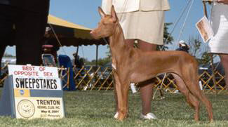 BOS in PHCA Sweepstakes at 6 ½ months old.